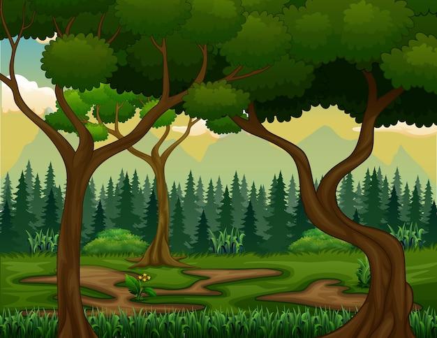 Roślin i drzew w krajobrazie przyrody