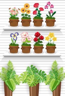 Roślin na półkach