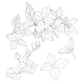 Roślin w kwiat, gałąź z tuszem kwiat szkicu