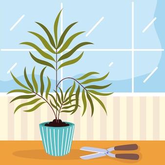Roślina doniczkowa i nożyczki