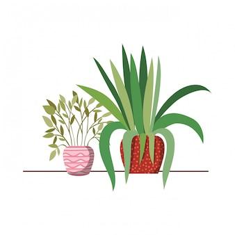 Roślina doniczkowa z doniczkami