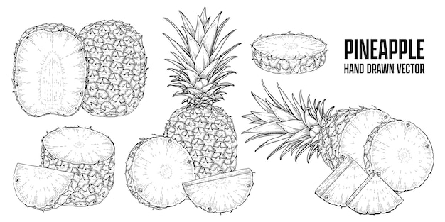 Roślina tropikalna ananas ręcznie rysowane szkic wektor ilustracje botaniczne