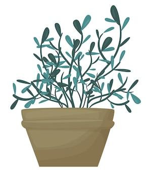 Roślina w doniczce ozdobna roślina domowa na białym tle ilustracja wektorowa