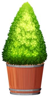 Roślina w doniczce z odizolowaną glebą