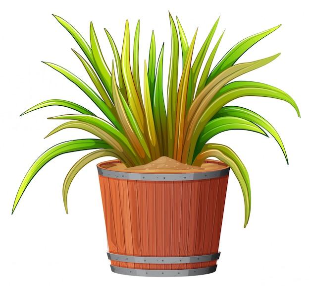 Roślina w drewnianym garnku