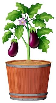 Roślina w garnku z ziemią odizolowywającą