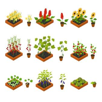 Roślina, warzywa, owoce i kwiaty sadzonki czarownica elementy zestaw widok izometryczny uprawiane rolnictwo. ilustracja wektorowa