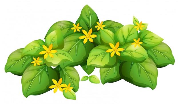 Roślina z zielonymi liśćmi i żółtym kwiatem