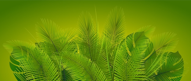 Roślinność tropikalna. liście roślin. egzotyczna roślinność.