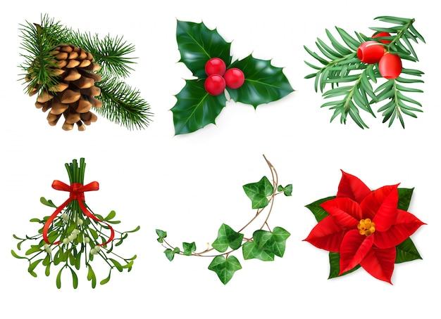 Rośliny chrismast dekoracja odizolowywająca