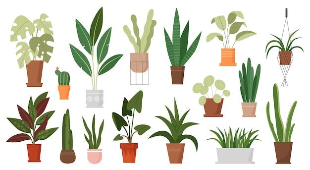 Rośliny domowe rosną w doniczkach ustawiają zielone rośliny doniczkowe rosnące w doniczkach wiszących w makramie