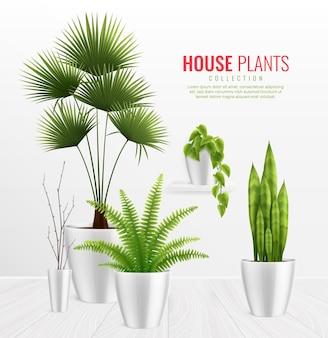 Rośliny domowe w doniczce ilustracja
