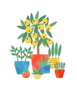 Rośliny domowe w doniczkach ceramicznych płaskie wektor ilustracja. drzewo cytrynowe i sukulenty. krajowa zieleń dekoracyjna. uprawa kwiatów, pielęgnacja roślin. wielobarwne doniczki na białym tle.