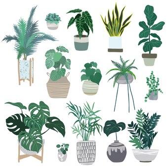 Rośliny domowe w doniczkach, modna ręcznie rysowane płaska ilustracja, miejski projekt dżungli, rośliny tropikalne.