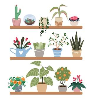 Rośliny domowe w doniczkach na półkach, zestaw ilustracji roślin doniczkowych.