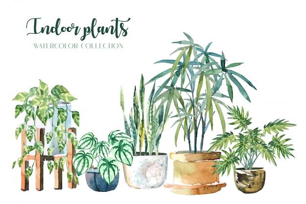 Rośliny domowe w kolorze wody (pothos, snake plant, peperomia, lady palm i xanadu) na białym tle ilustracji