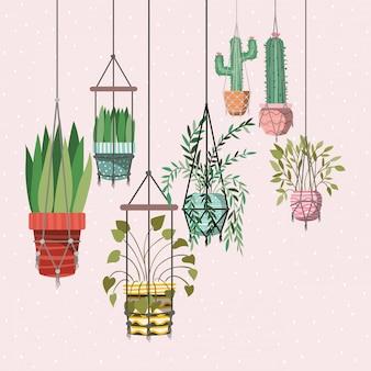 Rośliny domowe w wieszakach z makramy