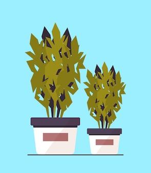 Rośliny doniczkowe ikona sadzenia szklarni ogród botaniczny koncepcja ilustracji wektorowych