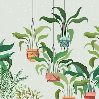 Rośliny doniczkowe na scenie ogrodowej wieszaki makramy