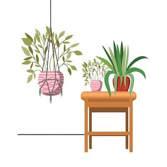 Rośliny doniczkowe na wieszakach i stole