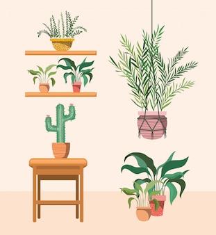 Rośliny doniczkowe w wieszakach makramy i drewnianym krześle