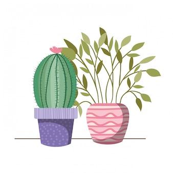 Rośliny doniczkowe z doniczkami