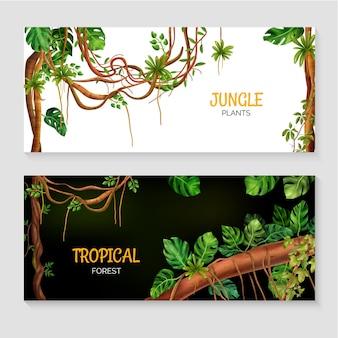 Rośliny dżungli tropikalnych lasów deszczowych zestaw z liana monstera na białym tle