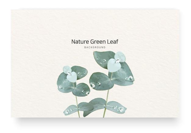 Rośliny i nuty eukaliptusa i kropelki wody
