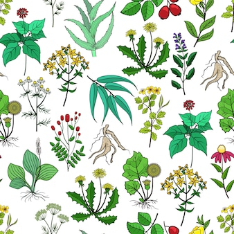 Rośliny lecznicze i zioła lecznicze tło na białym tle. wzór z zielonymi ziołami dla medycyny. zioła i kwiat dla ilustracji narkotyków