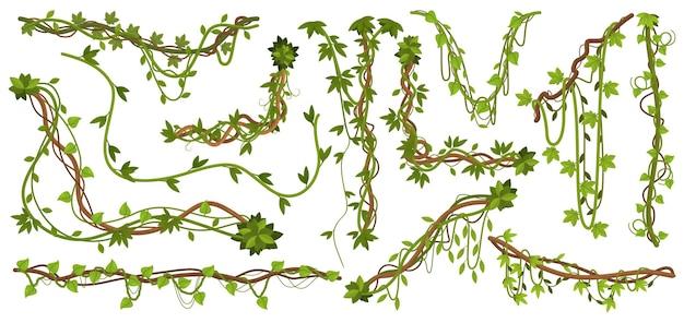 Rośliny liany dżungli. tropikalne gałęzie winorośli z liśćmi, wspinaczka na dzikie gatunki liana na białym tle zestaw