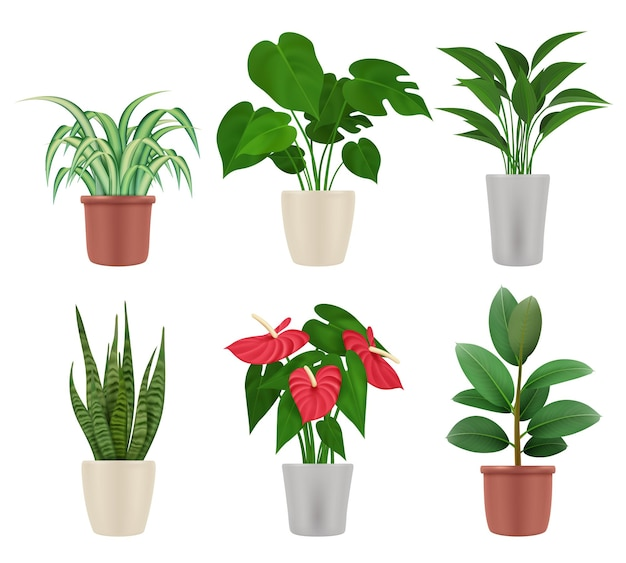 Rośliny ozdobne. domowe kwiaty w doniczkach kolorowe ilustracje botaniczne wazon z roślinami wektor zestaw. roślina domowa z zielonym liściem, flora dekoracyjna w pomieszczeniach
