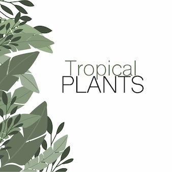 Rośliny tropikalne