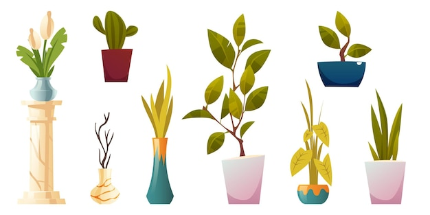 Rośliny w doniczkach i wazonach do wnętrza domu lub biura na białym tle