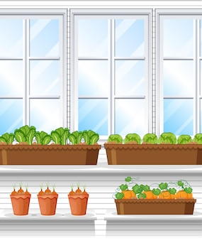 Rośliny warzywne ze sceną tła okna