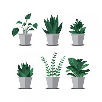 Rośliny wewnętrzne
