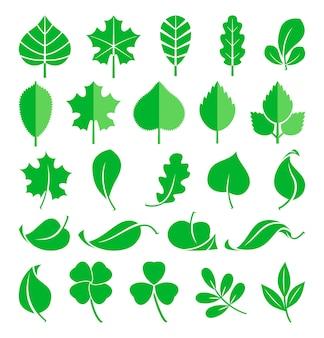 Rosnące rośliny. pędy liści i traw. natura zielony wiosenny liść, naturalna ekologia flora liść zestawu
