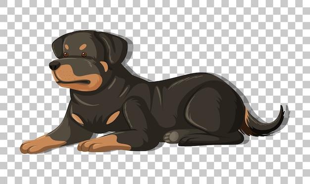 Rottweiler w pozycji kłaść postać z kreskówki na białym tle na przezroczystym tle