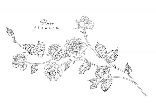Różane rysunki liści i kwiatów