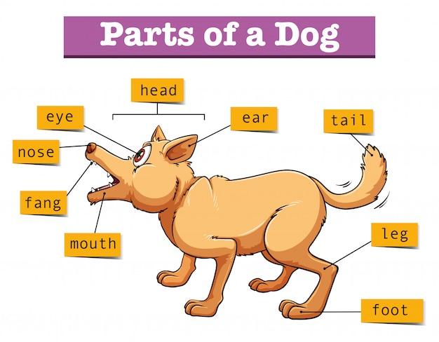 Różne części psa domowego