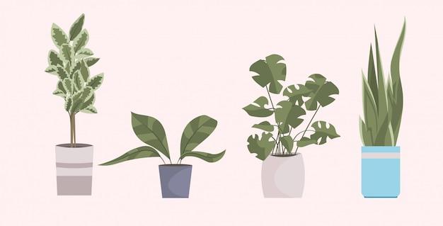 Różne domowe rośliny ogrodowe w różnych doniczkach koncepcja dekoracji domu pozioma