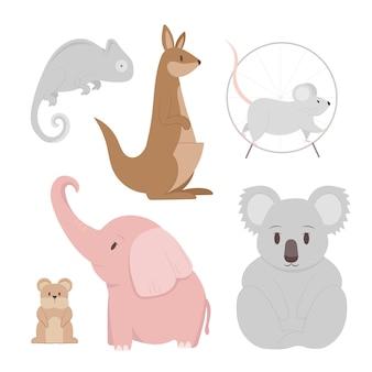 Różne kolekcje zwierząt domowych