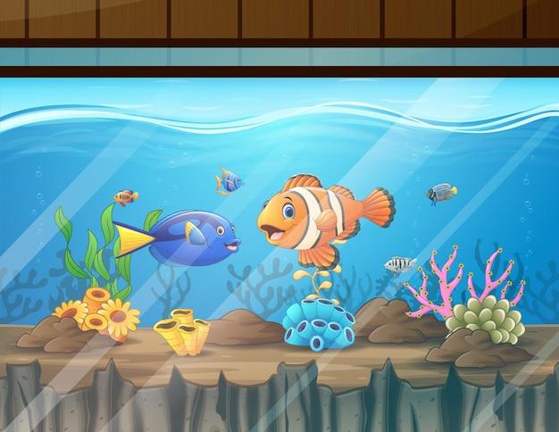 Różne kolorowe ryby w akwarium