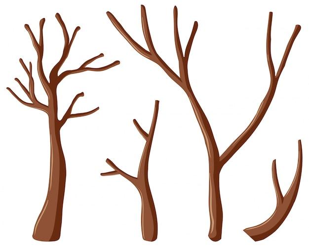 Różne kształty gałęzi