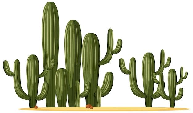 Różne kształty kaktusa w grupie