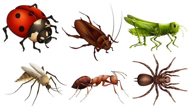 Różne owady