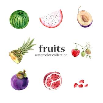 Różne owoce na białym tle akwarela
