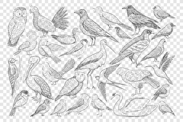 Różne ptaki doodle zestaw ilustracji