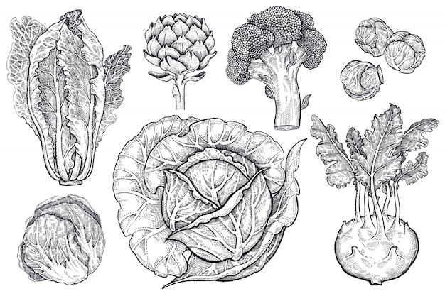 Różne rodzaje czarno-białej grafiki kapusty.