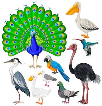 Różne rodzaje dzikich ptaków