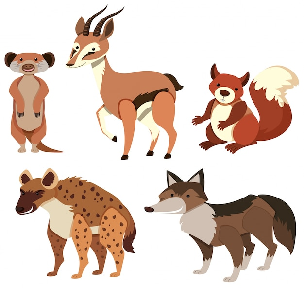 Różne rodzaje dzikich zwierząt na białym tle